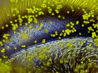 Конкурс микрофотографии Nikon Small World 2015